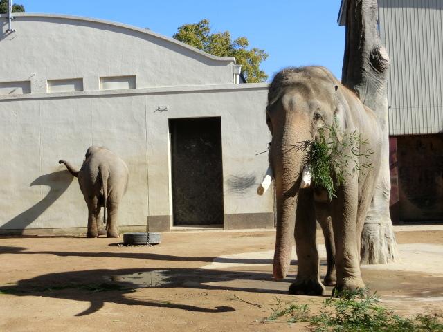 動物園王子 035