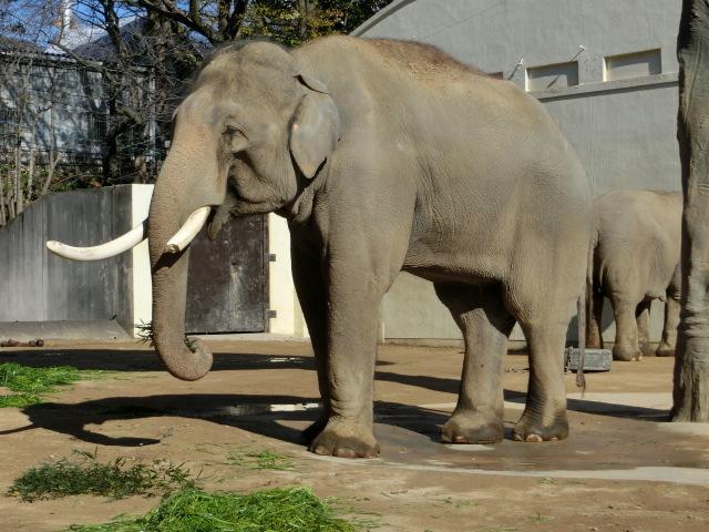 動物園王子 036