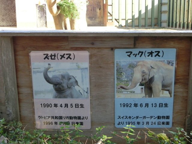 動物園王子 034
