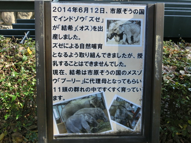 動物園王子 038