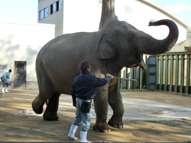 動物園王子 218
