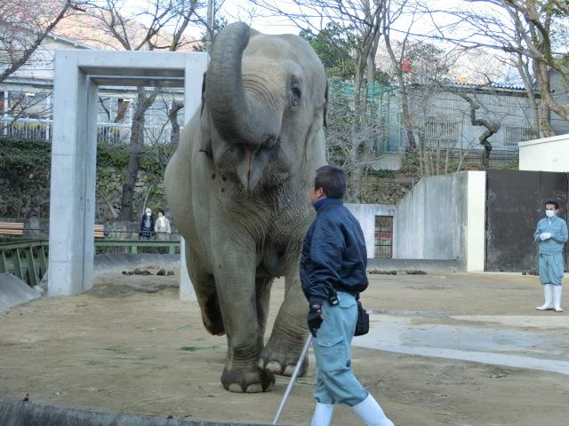 動物園王子 224