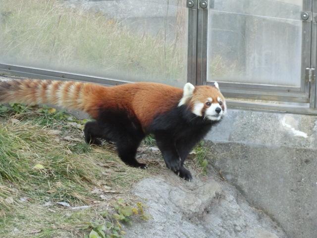 動物園王子 264