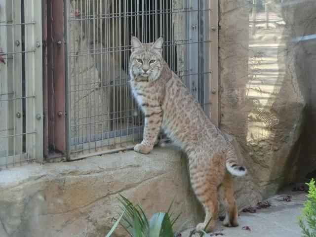 動物園王子 114