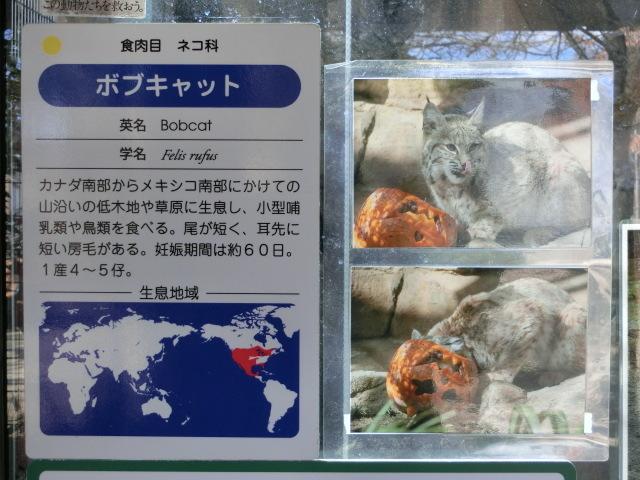 動物園王子 113