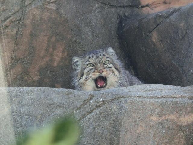 動物園王子 108