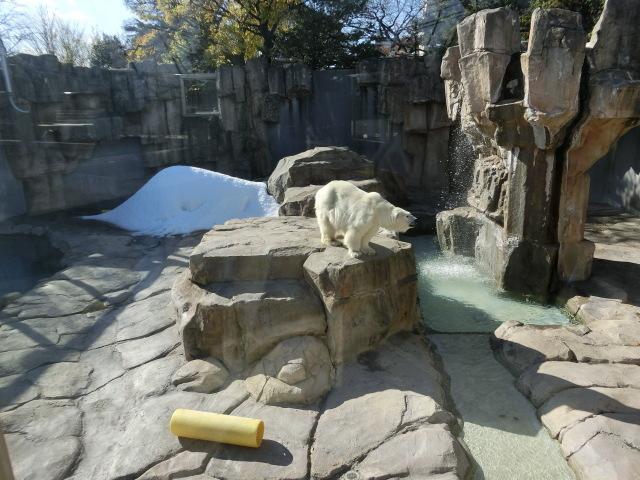 動物園王子 086