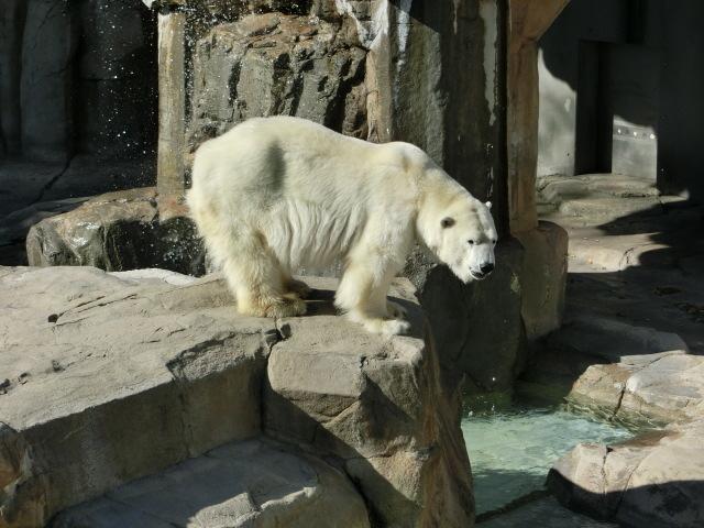 動物園王子 093