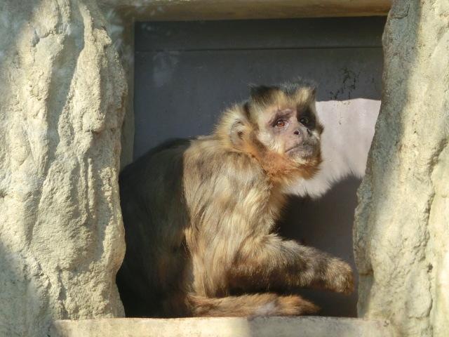 動物園王子 126