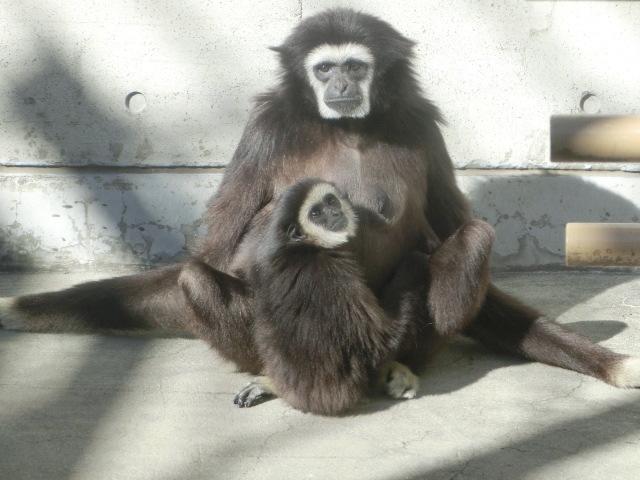動物園王子 137