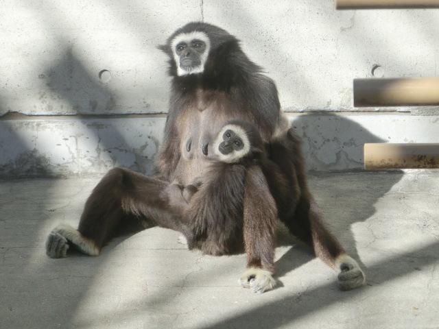 動物園王子 141