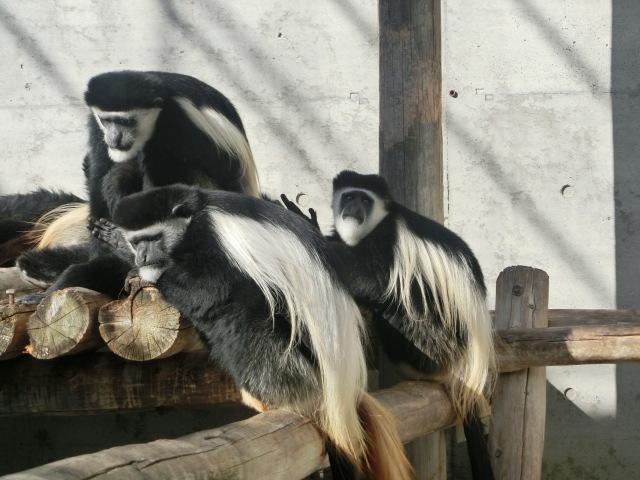 動物園王子 147