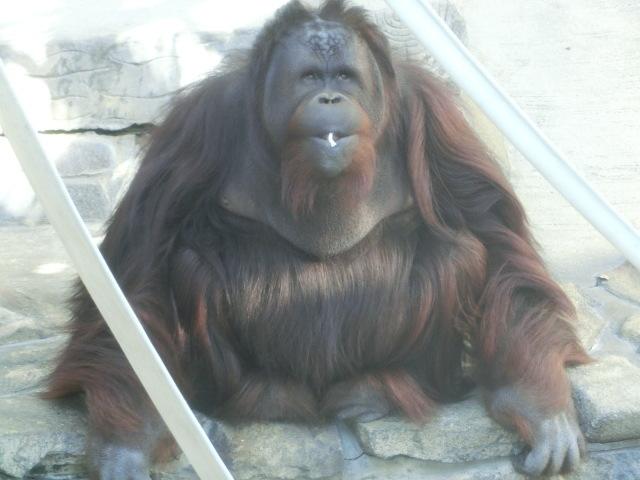 動物園王子 154