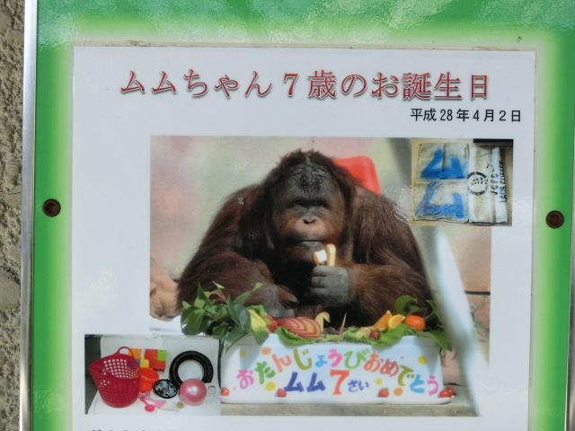 動物園王子 159