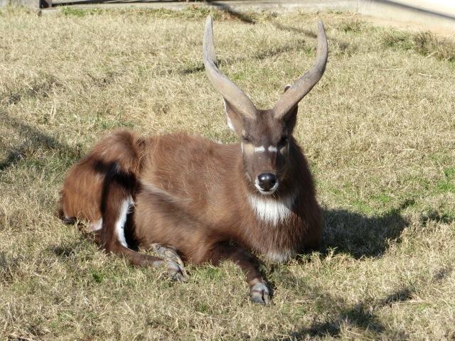 動物園王子 173