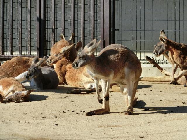 動物園王子 168