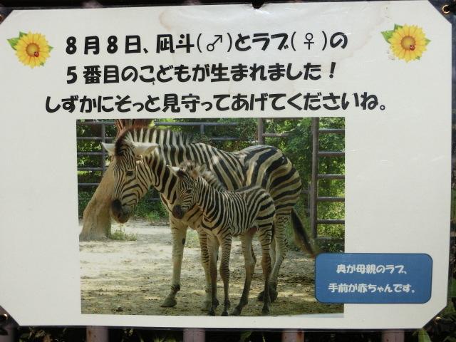 動物園王子 178