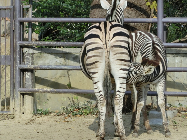 動物園王子 190