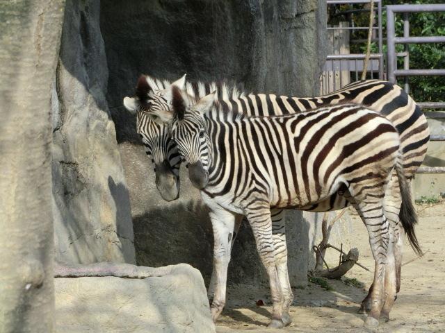 動物園王子 194