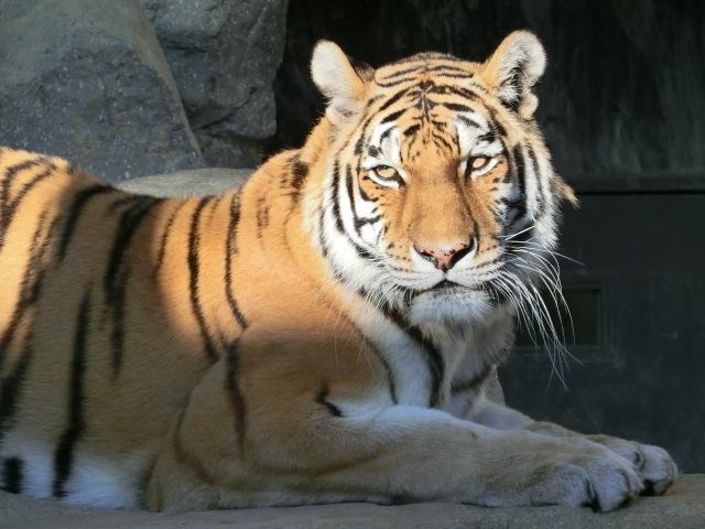 動物園王子 277
