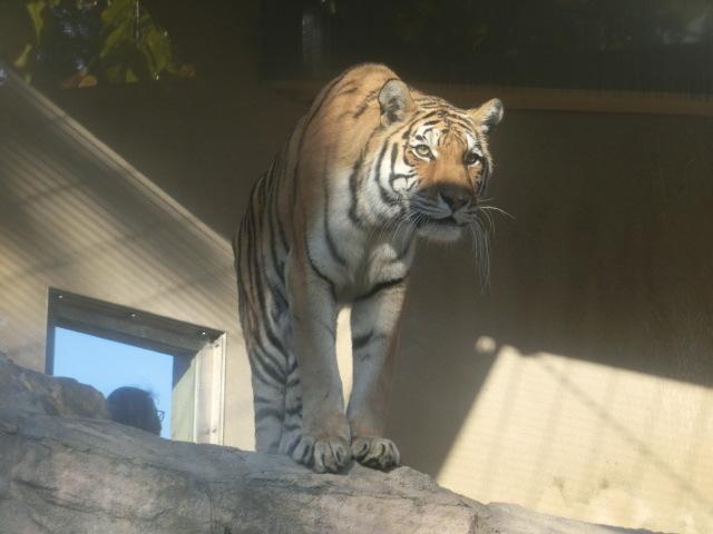 動物園王子 226