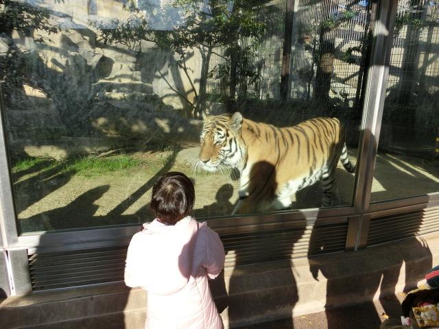 動物園王子 243