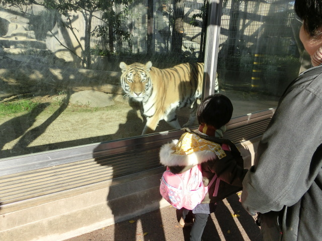 動物園王子 244