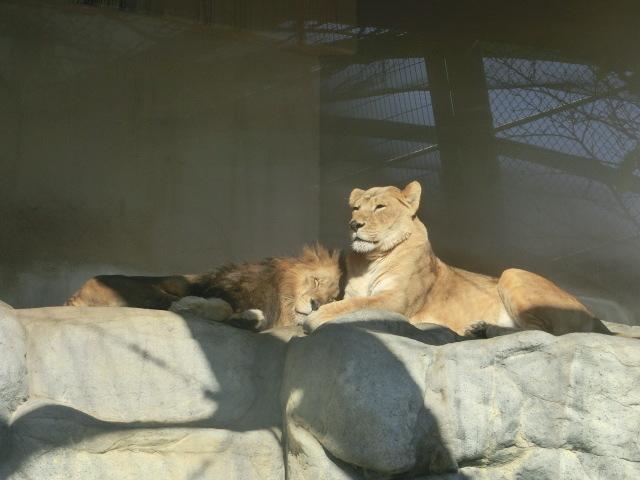 動物園王子 064