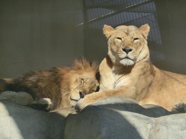 動物園王子 065