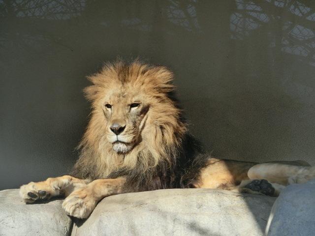 動物園王子 073