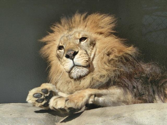 動物園王子 074
