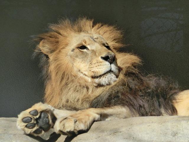 動物園王子 076