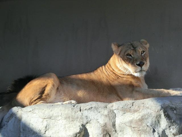 動物園王子 246
