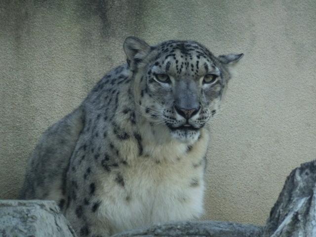 動物園王子 230
