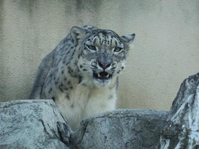 動物園王子 236