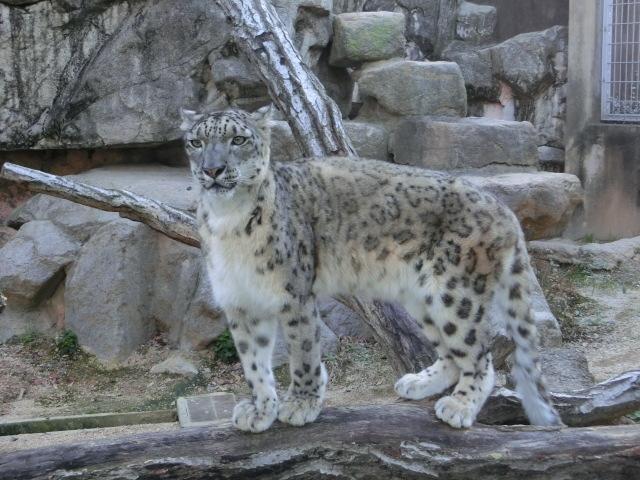 動物園王子 291