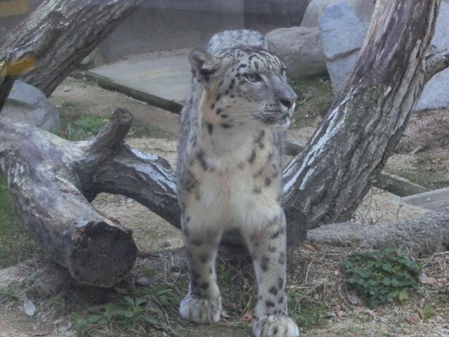 動物園王子 285