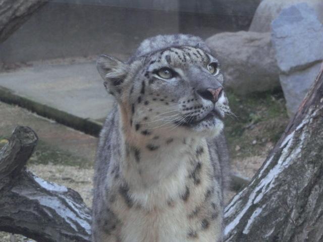 動物園王子 287