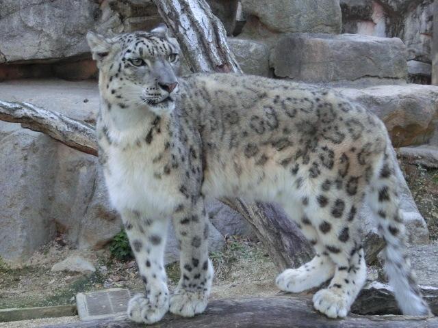 動物園王子 292
