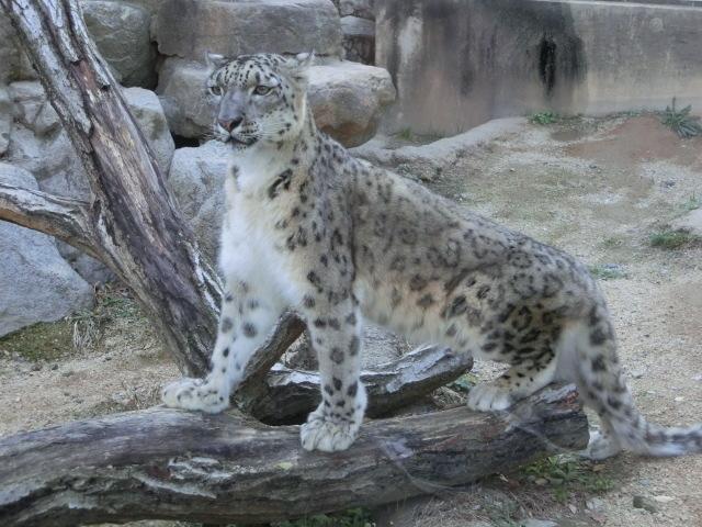 動物園王子 295