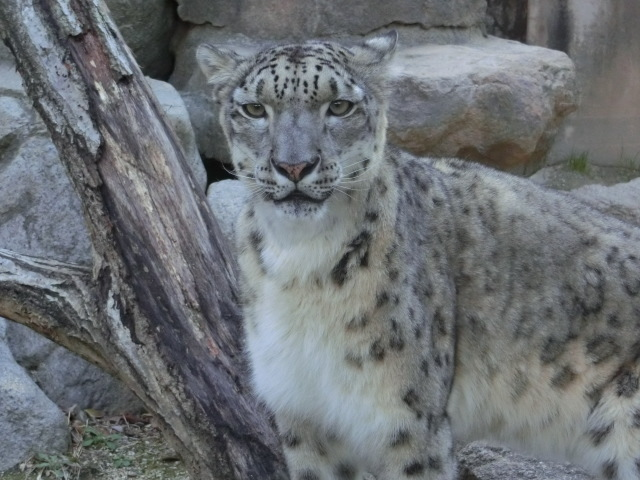動物園王子 298