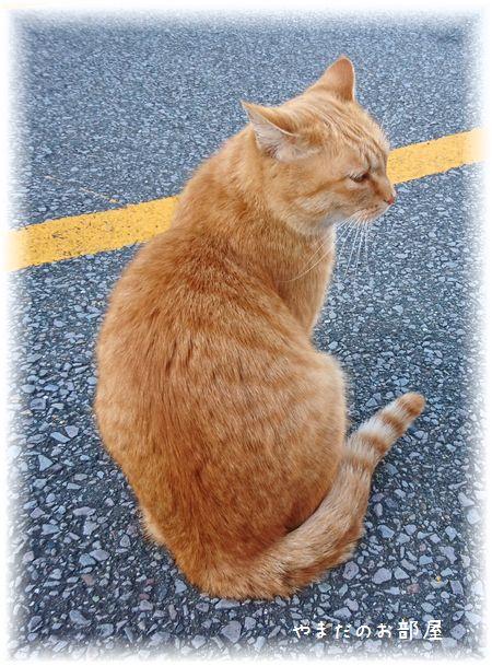 伊東の猫さん