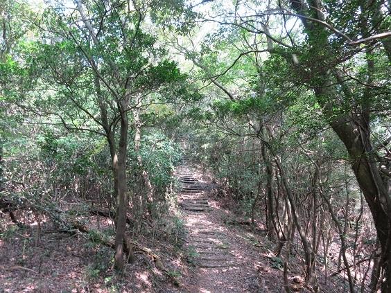 竜王山 林