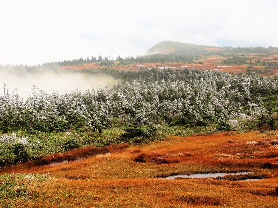 n霧氷の苗場山