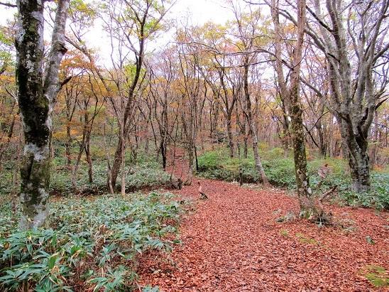 落葉の比婆山
