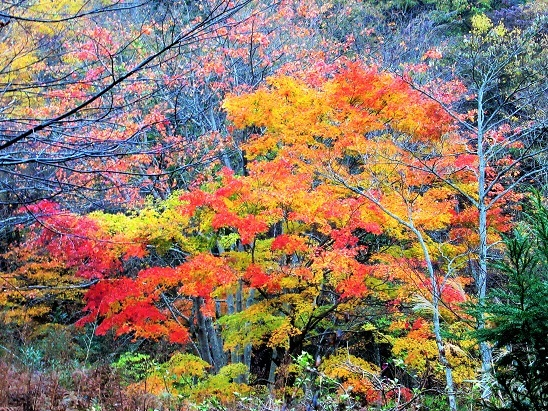 大江山の紅葉