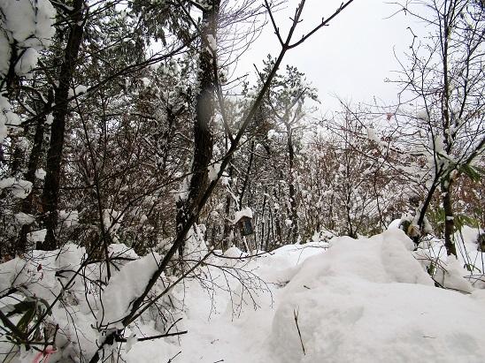 大蔵ヶ岳山頂