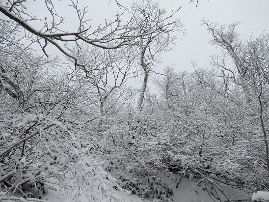 冠雪化粧2