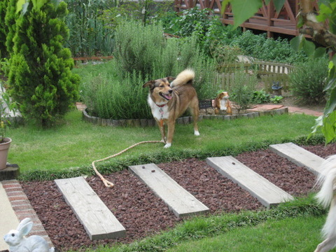 リンの庭で