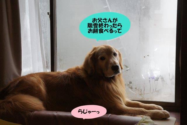 DSC04596.jpg